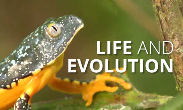Programme 2 - Life and Evolution